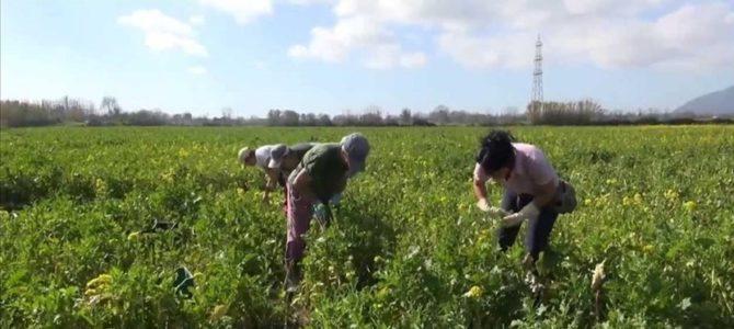 Esenzione IMU anche per gli agricoltori pensionati